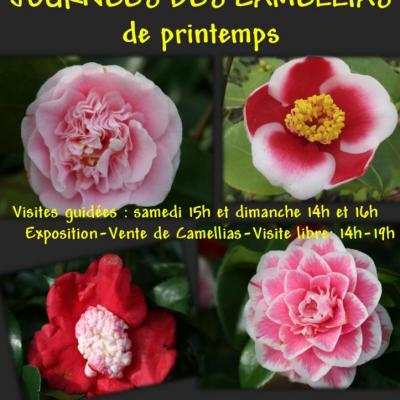 AFFICHE CAMELLIAS PRINTEMPS-1-2015